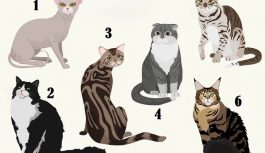 Izvēlies vienu no attēlā redzamajiem kaķiem un uzzini dažas sava rakstura iezīmes