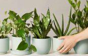 Uzziniet, kādi augi ir atbilstoši katrai telpai