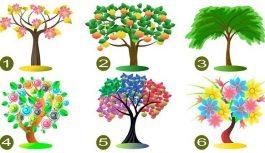 Izvēlieties vienu koku un atklājiet savas dominējošās rakstura īpašības