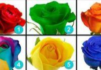 Izvēlies rozi un uzzini savas galvenās dzīves prioritātes