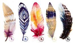 Izvēlieties spalvu, kura jums visvairāk piesaista, un atklājiet savu iekšējo spēku