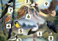 Izvēlieties putnu un uzziniet, vai putna apraksts atbilst jūsu raksturam