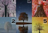Psiholoģiskais tests: izvēlieties koku un uzziniet, kāds partneris jums ir piemērots!
